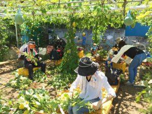 枝豆収穫in清瀬③