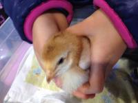 羽村動物園の中ではひよこやハムスターなどを抱っこできる施設もあり、子どもたちに大人気!